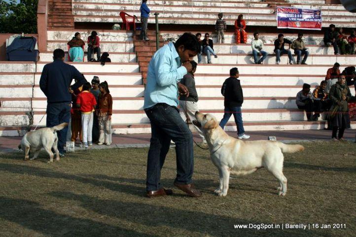 sw-14, ex-112,labrador,, CHERRYPIE OF SUNNYLAND, Labrador Retriever, DogSpot.in