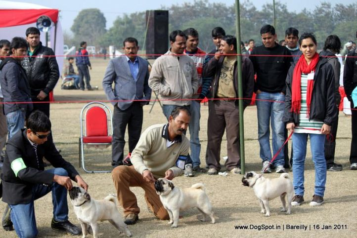 sw-14, pug, Bareilly Dog Show 2011, DogSpot.in