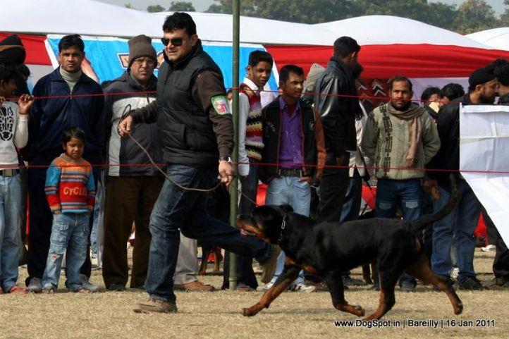 sw-14, ex-138,rottweiler,, FILEX, Rottweiler, DogSpot.in
