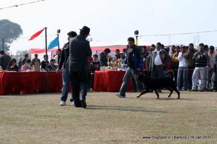sw-14, ex-146,rottweiler,, SERB. JR. CH. IND. CH. FERRO VONM LENCHEN, Rottweiler, DogSpot.in