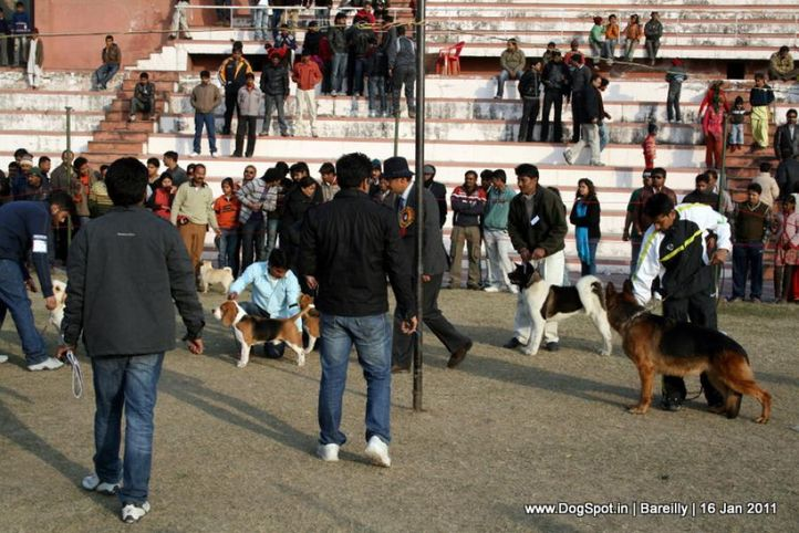 sw-14, lineup,, Bareilly Dog Show 2011, DogSpot.in