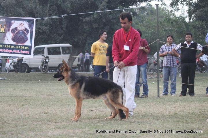 gsd,sw-41,, Bareilly Dog Show 2011, DogSpot.in