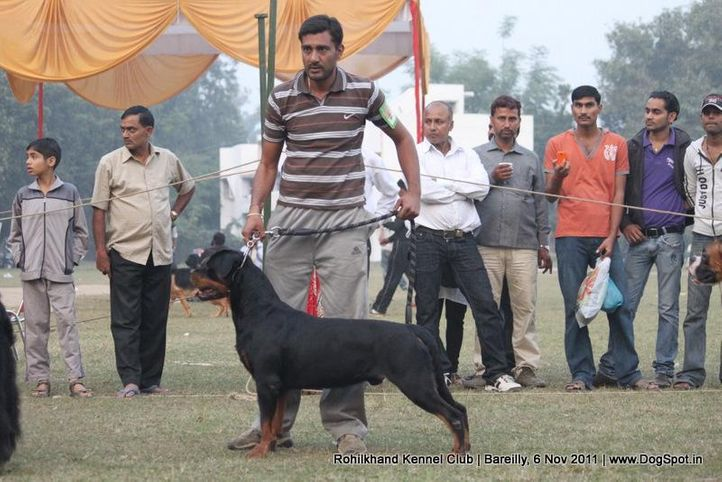 rottweiler,sw-41,, Bareilly Dog Show 2011, DogSpot.in