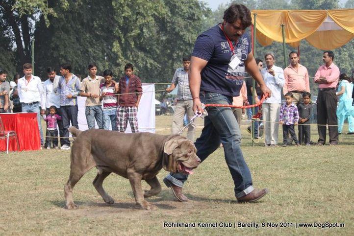 mastiff,sw-41,, Bareilly Dog Show 2011, DogSpot.in