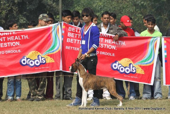 boxer,sw-41,, Bareilly Dog Show 2011, DogSpot.in
