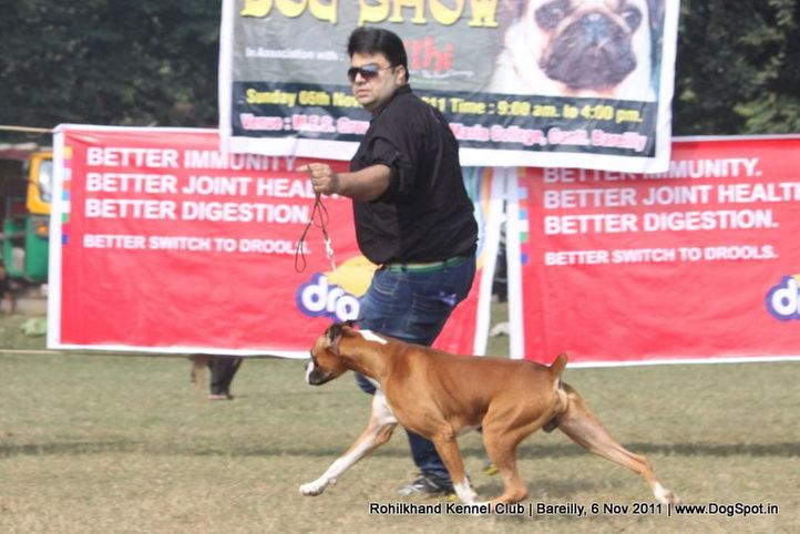 boxer,ex-117,sw-41,, NEXT STEP'S TRIUMPH, Boxer, DogSpot.in