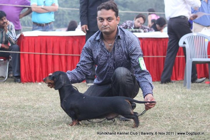 dachshund,ex-59,sw-41,, DEYWOO'S EXCALIBER, Dachshund Standard- Smooth Haired, DogSpot.in