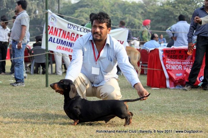 dachshund,sw-41,, Bareilly Dog Show 2011, DogSpot.in