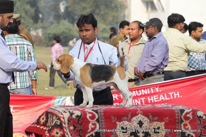 beagle,sw-41,, Bareilly Dog Show 2011, DogSpot.in