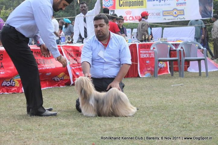 lhasa,sw-41,, Bareilly Dog Show 2011, DogSpot.in