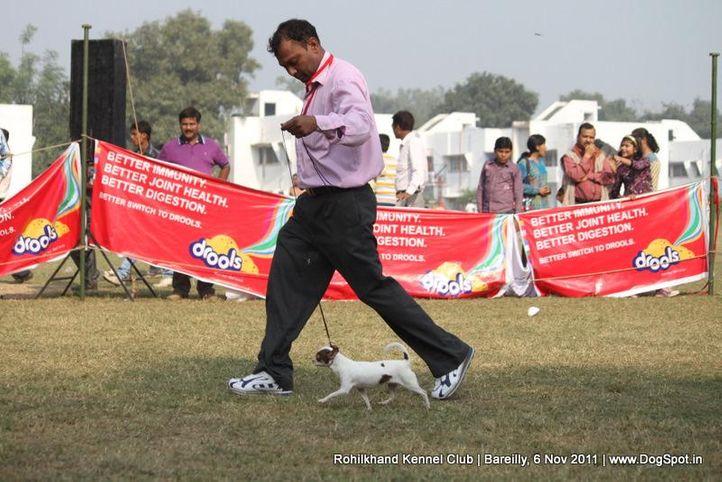 sw-41,, Bareilly Dog Show 2011, DogSpot.in