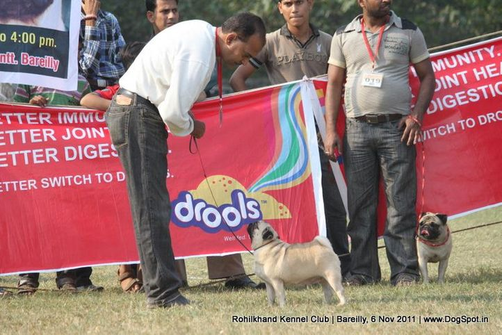 pug,sw-41,, Bareilly Dog Show 2011, DogSpot.in