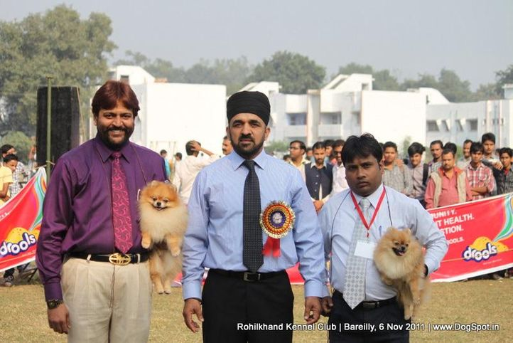 ex-5,sw-41,, TH. CH. GOLDEN STAR'S IT'S SHOW TIME, Pomeranian, DogSpot.in
