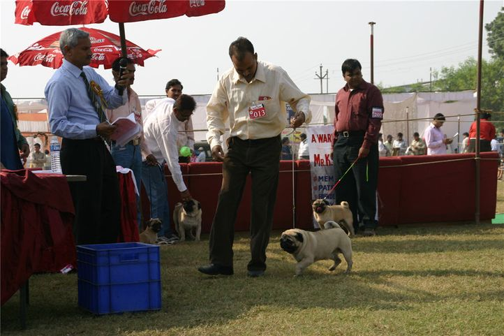 , Bareilly Dog Show, DogSpot.in
