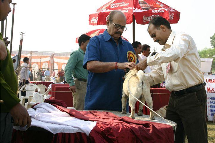 pug, Bareilly Dog Show, DogSpot.in
