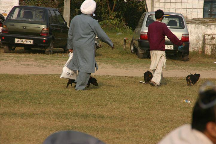 ground,, Bareilly Dog Show, DogSpot.in