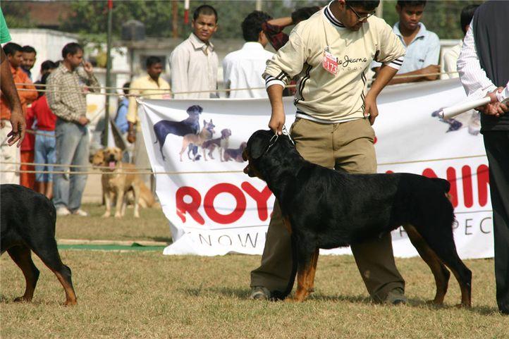 rottweiler,, Bareilly Dog Show, DogSpot.in