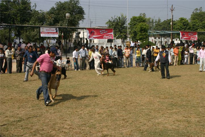 workinggroup,, Bareilly Dog Show, DogSpot.in