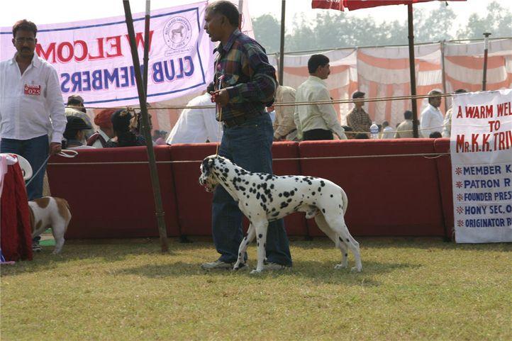 dalmatian,, Bareilly Dog Show, DogSpot.in