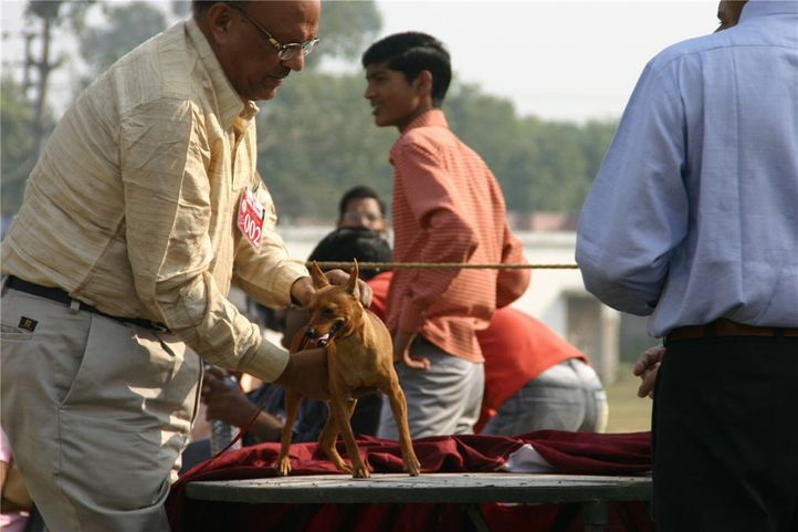 minpin, Bareilly Dog Show, DogSpot.in