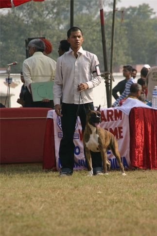 boxer, Bareilly Dog Show, DogSpot.in