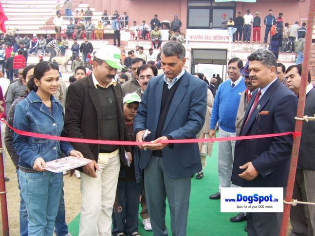 committee,ground,, Bareilly Show, DogSpot.in
