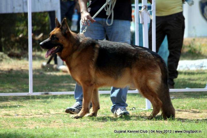 sw-64, alsatian,ex-164,gsd,sw-64,, JARNO VON DER KAHLER HEIDE, German Shepherd Dog, DogSpot.in