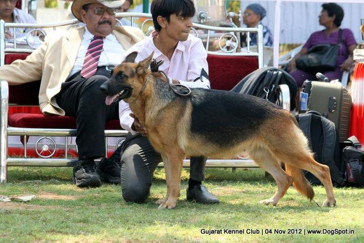 sw-64, alsatian,ex-167,gsd,sw-64,, TANVIR'S NINNE, German Shepherd Dog, DogSpot.in