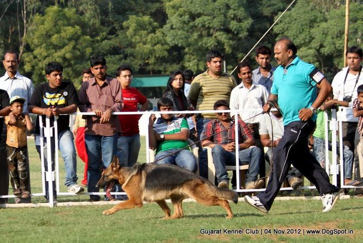 sw-64, alsatian,ex-177,gsd,sw-64,, Baroda Dog Show 4th Nov 2012, DogSpot.in