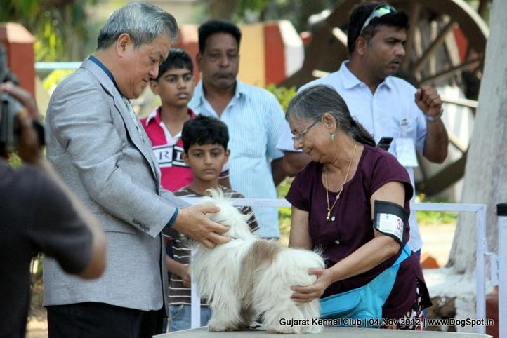 sw-64, ex-35,lhasa apso,sw-64,, KAYAARA'S LAILA, Lhasa Apso, DogSpot.in