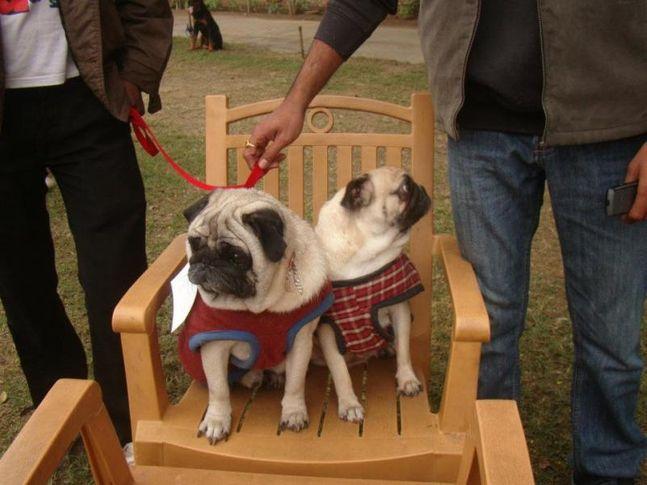 benaras club all breed dog show, benaras club all breed dog show, DogSpot.in