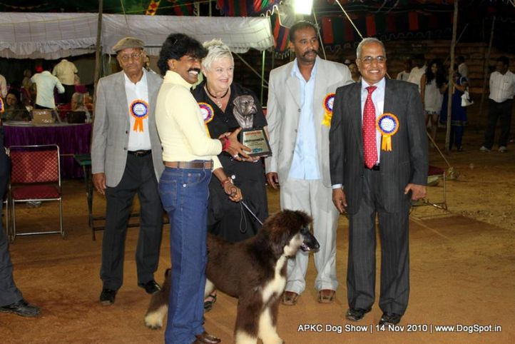 afghan,sw-11,ex-39,lineup,, JAZZS ANGEL VON AGRANI, Afghan Hound, DogSpot.in