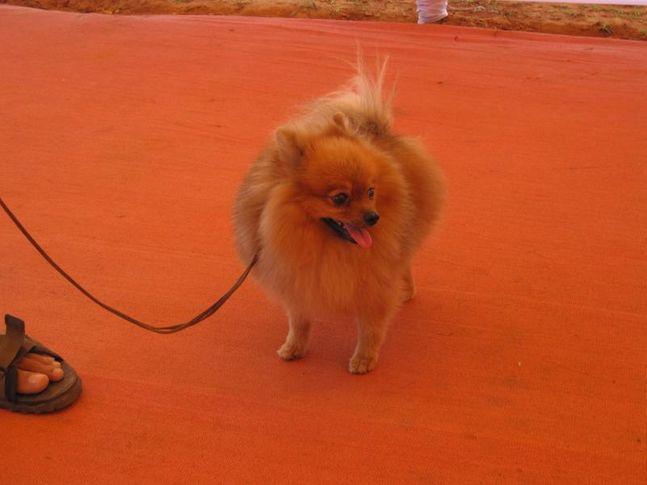 bhubaneswar dog show, Bhubaneswar dog show, DogSpot.in
