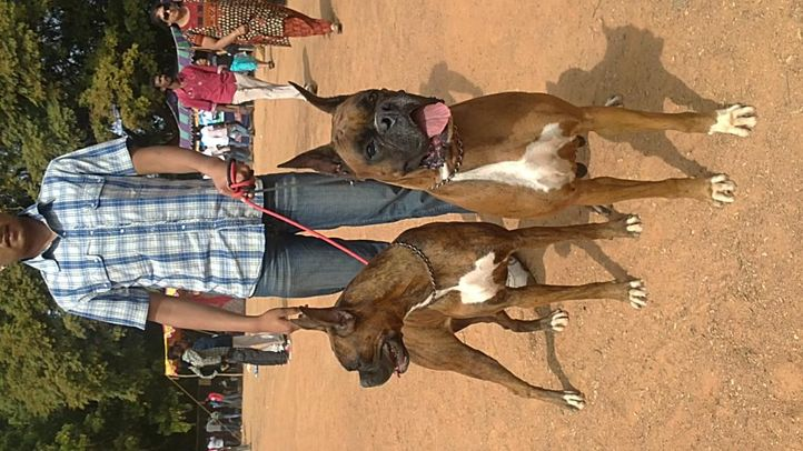 bangalore dog show photos, Bull Dogs, DogSpot.in