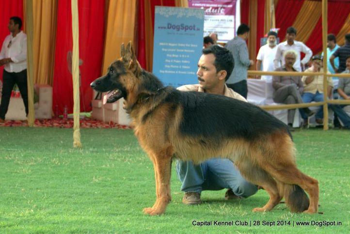 ex-143,gsd,sw-128,, ASHAS BOWLER, German Shepherd Dog, DogSpot.in