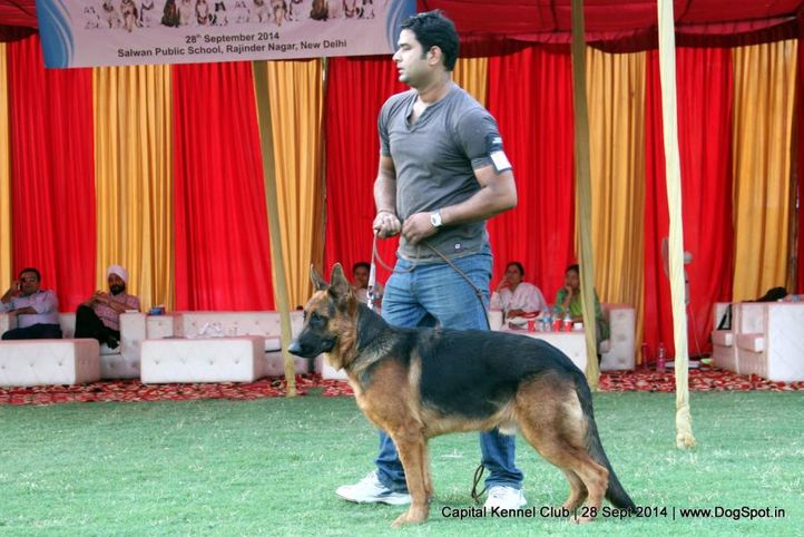 gsd,sw-128,, Capital Kennel Club - 2014 , DogSpot.in