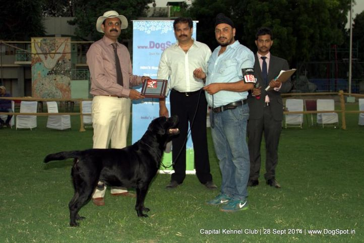 ex-165,lineup,sw-128,, Capital Kennel Club - 2014 , DogSpot.in