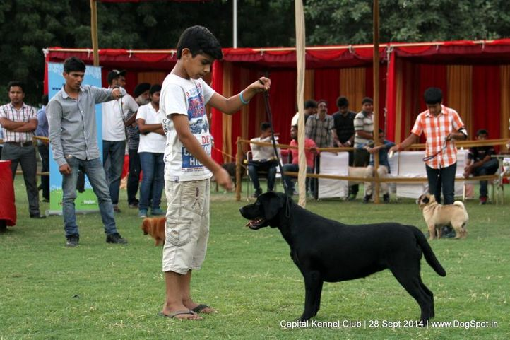 child handler,sw-128,, Capital Kennel Club - 2014 , DogSpot.in