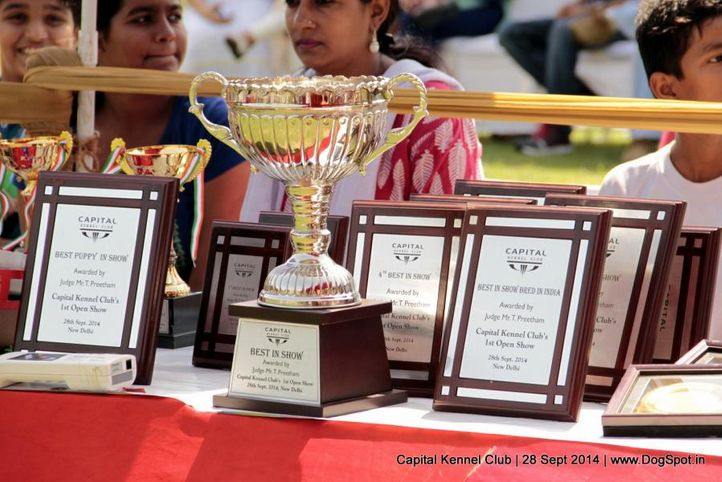 sw-128,trophy,, Capital Kennel Club - 2014 , DogSpot.in