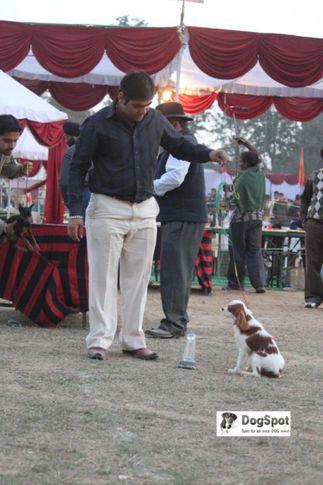 Cavalier, Cavalier Chandigarh, DogSpot.in
