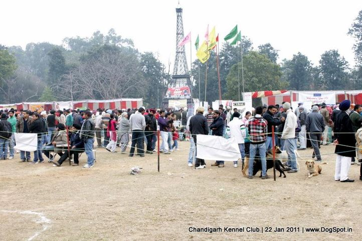 ground,sw-50,, Chandigarh 2012, DogSpot.in
