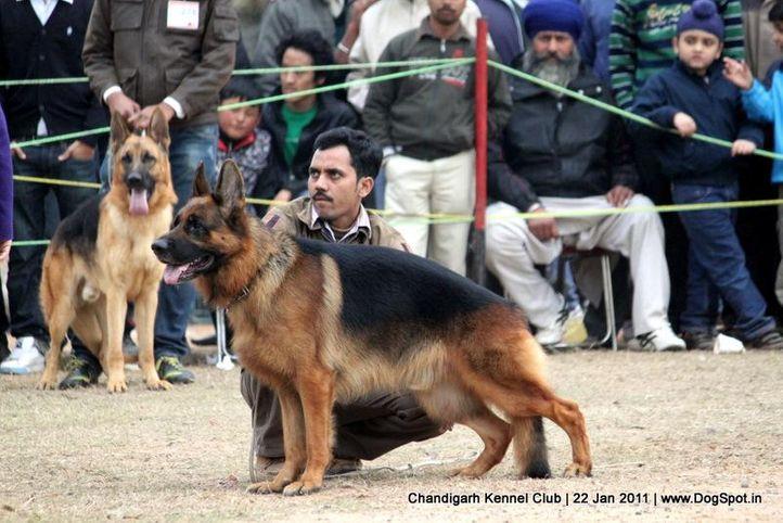 gsd,sw-50,, Chandigarh 2012, DogSpot.in