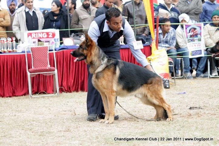 ex-274,gsd,sw-50,, Colt Hui Chang, Tibetan Mastiff, DogSpot.in