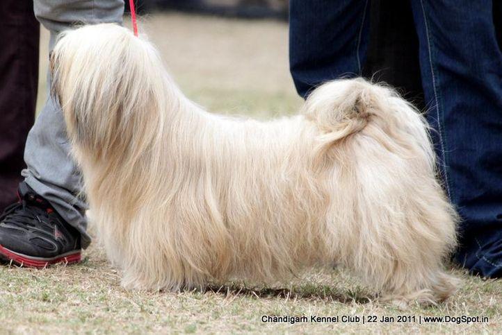 sw-50,utility,, Chandigarh 2012, DogSpot.in