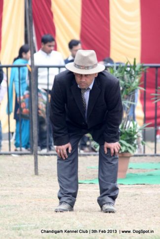 judge,sw-75,, Chandigarh Dog Show 2013, DogSpot.in