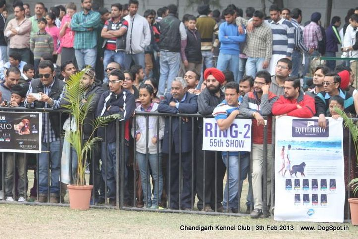 people,sw-75,, Chandigarh Dog Show 2013, DogSpot.in