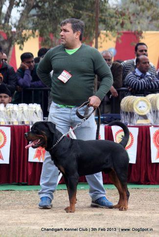 ex-239,rottweiler,sw-75,, ROCKY, Rottweiler, DogSpot.in