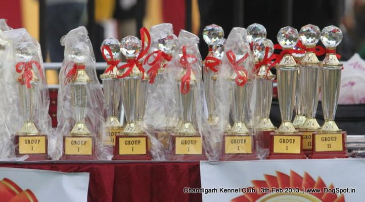 show trophy,sw-75,, Chandigarh Dog Show 2013, DogSpot.in