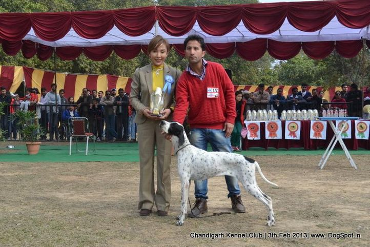 pointer,sw-75,, Chandigarh Dog Show 2013, DogSpot.in