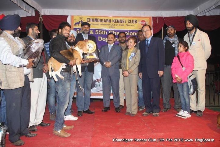 line up,sw-75,, Chandigarh Dog Show 2013, DogSpot.in